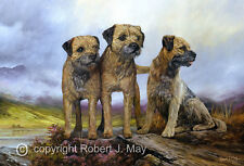 Border Terrier Limited Edition Print by Robert May