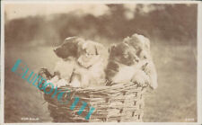 """Dogs Puppies In A Basket Real photo """" For Sale"""" A&G Taylor's Real Photo"""