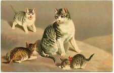 CHATS . CATS.  PETITS JEUX EN FAMILLE.