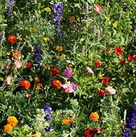Deer Resistant Wild Flower Seed Mix - Quick and Long Lasting Blooms (1 Lb)