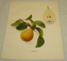 1921 Antique Print/FONTENAY/From Pears of New York, by Hedrick