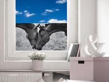 Sichtschutz Folie Sichtschutzfolie für Mädchenzimmer Pferde Pferdeköpfe