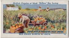 Harvesting Pineapple Fruit In British West Indies 1920s Trade Ad Card