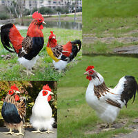 Realistic Farm Animals Lifelike Rooster Hen Figurines Christmas Gift Photo Prop