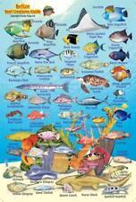 Belize Reef Creatures Mini waterproof Card by Franko Maps