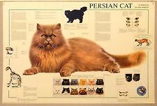 (PRL) 1992 PERSIAN CAT GATTO PERSIANO LE CHAT PERSAN AFFICHE PRINT ART POSTER
