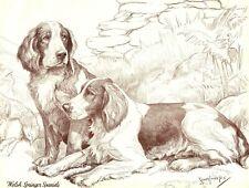 1930s Antique Welsh Springer Spaniel Dog Print Nina Scott Langley Art 3278-F