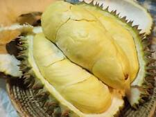 fresh big 12 seed Durian Durio zibethinus MONTHONG Queen of Fruit