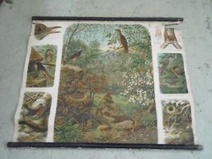 Sänger  Rollkarte Schulwandkarte  100 cm x 75 cm# 35