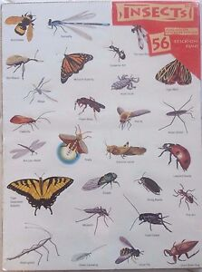 Rare old Educational Insights Insect Stickers 1992 Vintage in Plastic US Seller