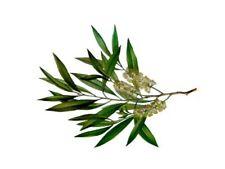 Huile essentielle de tea tree - 50ml - Jusqu'à -30%