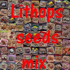 Succulent-Mesembs-Lithops SEEDS MIX  500 seeds mix