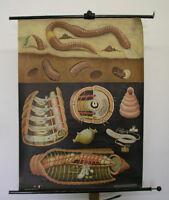 schönes altes Schulwandbild JKQ Regenwurm 83x114cm vintage chart ~1959 earthworm