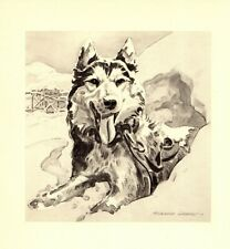 1947 Antique Siberian Husky Art Print Morgan Dennis Husky Dog Art 3879f