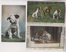 3 CIRCA 1907 POSTCARDS - DOGS