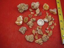 (k-4052) 50 g Rare Kauri tree Gum bag chips copal Amber New Zealand Tane Mahuta