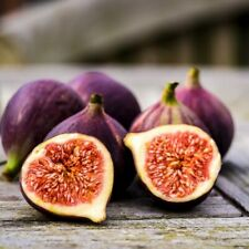 Black Mission Fig (20 seeds) fresh this season's harvest from my garden