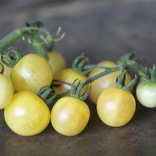 graines de tomate mirabelle blanche vendu en sachet de 30 graines