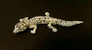 Kaiyodo Furuta Choco Q Pet 2 Yellow Spotted Leopard Gecko Lizard Figure