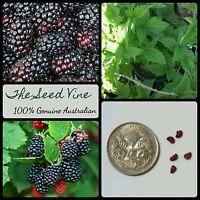 10+ ORGANIC SILVANBERRY SEEDS (Rubus ursinus x hybrid) Edible Berry Fruit Shrub
