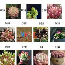 60pcs/bag Mixed Succulent Seeds Lithops Rare Living Stones Plants Cactus Home GA