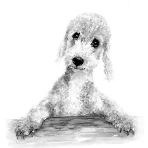 Bedlington terrier greetings card