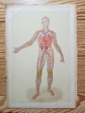Cardiovascular System - Vintage antique Medical print 1884 anatomy Arteries Vein