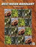 St Kitts 2016 MNH West Indian Mahogany WWF 16v M/S Trees Plants Stamps
