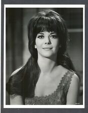 GORGEOUS + SEXY NATALIE WOOD - NEAR MINT COND 1966 PHOTO - HARD TO FIND