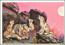 Coyote Canis latrans Kojote AUTOCOLLANT STICKER IMAGE ANNEES 60s