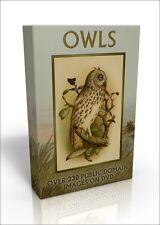 Owls - over 230 public domain images on DVD inc. Audubon, Edward Lear and more!