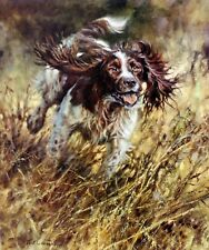 ENGLISH SPRINGER SPANIEL ESS DOG SIGNED LIMITED EDITION PRINT - by Mick Cawston