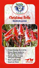 Blandfordia punicea - Christmas Bells 15 seeds