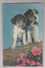 Quietschekarte Süße Hunde AK Chiens Dogs Honden France 1601058