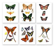 Girls Room Decor Butterflies Decor Wall Art Set of 6 unframed Butterfly prints