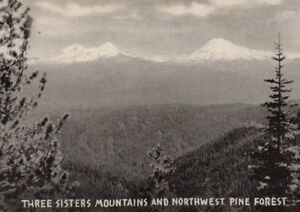 Vintage Postcard  Three Sisters Mountains and Northwest Pine Forest