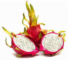 "2 x 5"" Dragon Fruit Cutting plant White Type Pitaya Cactus Propagation"