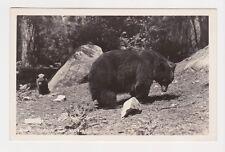 BEARS Mamma Bear and Cub RPPC Real Photo in Yosemite National Park CA postcard
