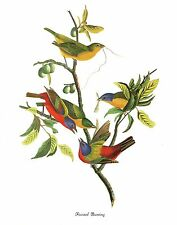 "1978 Vintage AUDUBON BIRDS /""BLACK-THROATED BLUE WARBLER/"" Color JUMBO Lithograph"