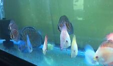 5 Assorted Discus 2-4""