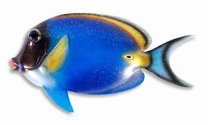 "Hand Painted 16"" Tropical Fish Wall Mount Decor Sculpture Long Blue 76A-Z"