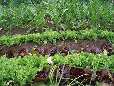 Graines pour potager d'automne 15 varietés à semer !!!!