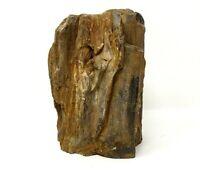 Petrified Wood - 6 lbs 9 oz - Wyoming - Rough                              BTF02