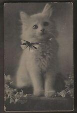 The Cute Kitty 1907 C E Bullard Cat on Postcard