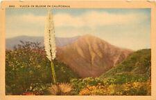 Linen Postcard California H727 Yucca in Bloom Mountains Wildflowers Desert Scene