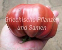 🔥 🍅 Zapotec Tomate Tomaten alte Tomaten-Sorte Indianer 10 frische Samen Balkon