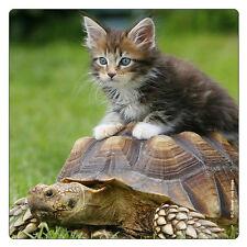 Kühlschrank - Magnet: Hallo Taxi! Katze sitzt auf Schildkröte - cat and turtle