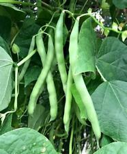 Blue Lake Pole Green Bean Seeds 15 Ct Vegetable Garden NON-GMO USA FREE SHIPPING
