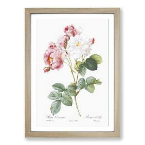 Damask Roses in Pink Flowers Pierre-Joseph Redoute Framed Picture Print Wall Art