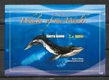 Sierra Leone 2010 baleines bloc n° 635 neuf ** 1er choix